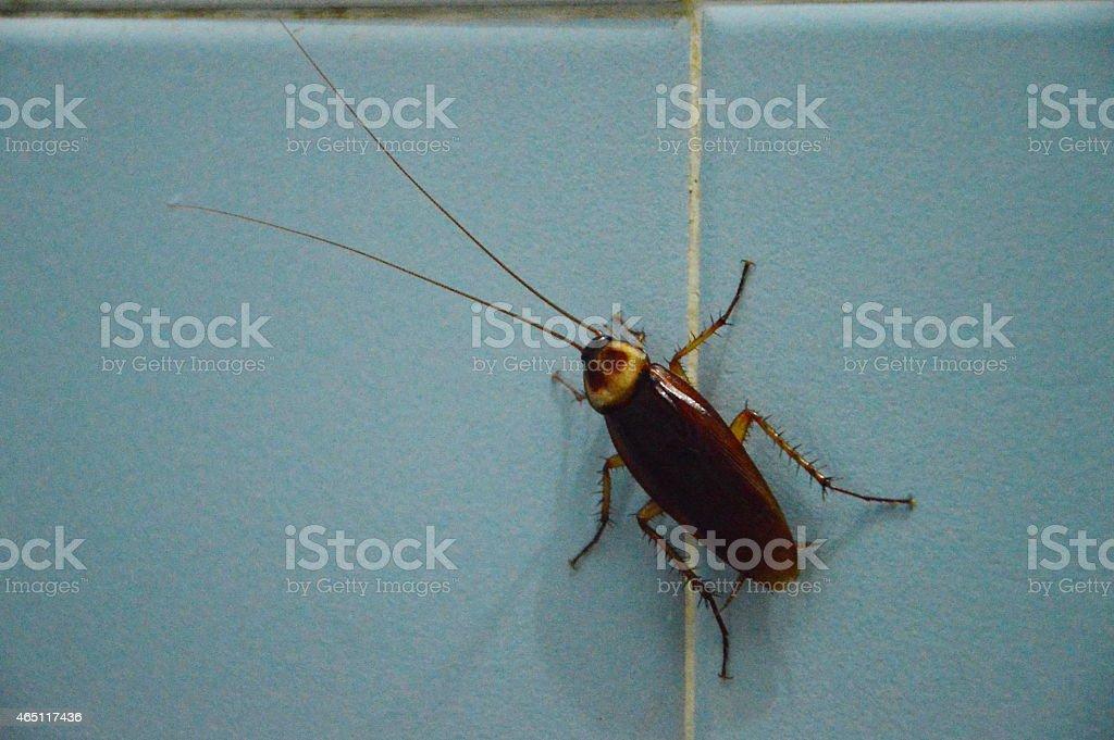 cockroach on bathroom wall stock photo