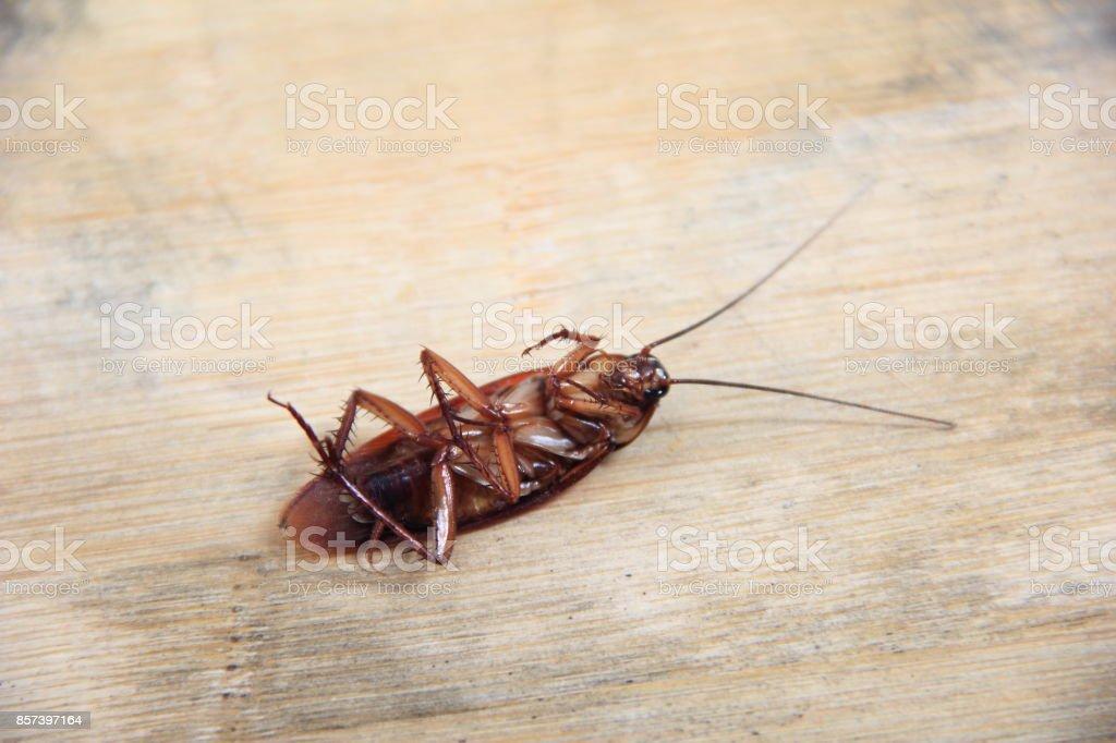 Cockroach on the board - foto stock