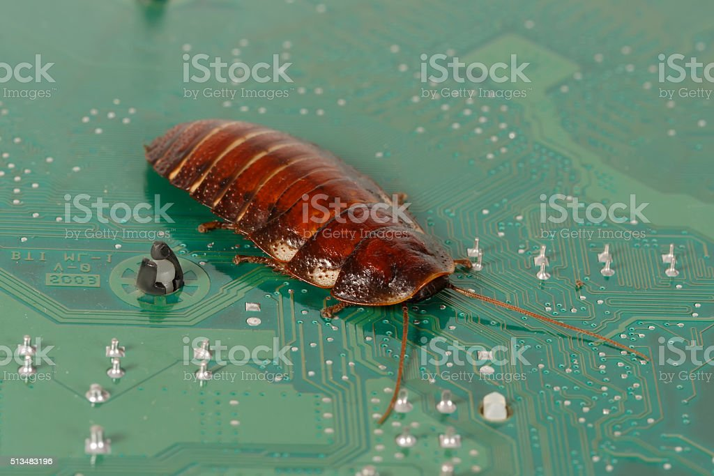 cockroach on the  computer microcircuits. Concept computer bug stock photo