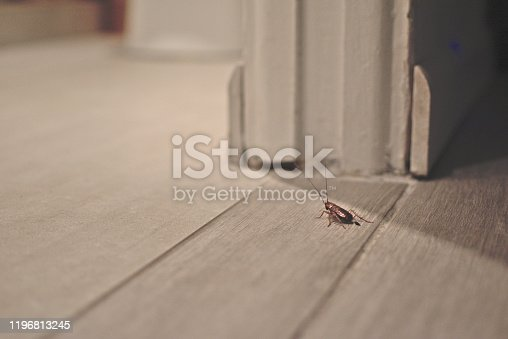 istock Cockroach on wooden floor in apartment house 1196813245
