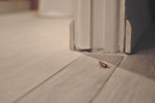 istock Cockroach on wooden floor in apartment house 1196813245