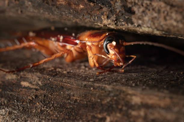 Kakerlake auf Holz – Foto