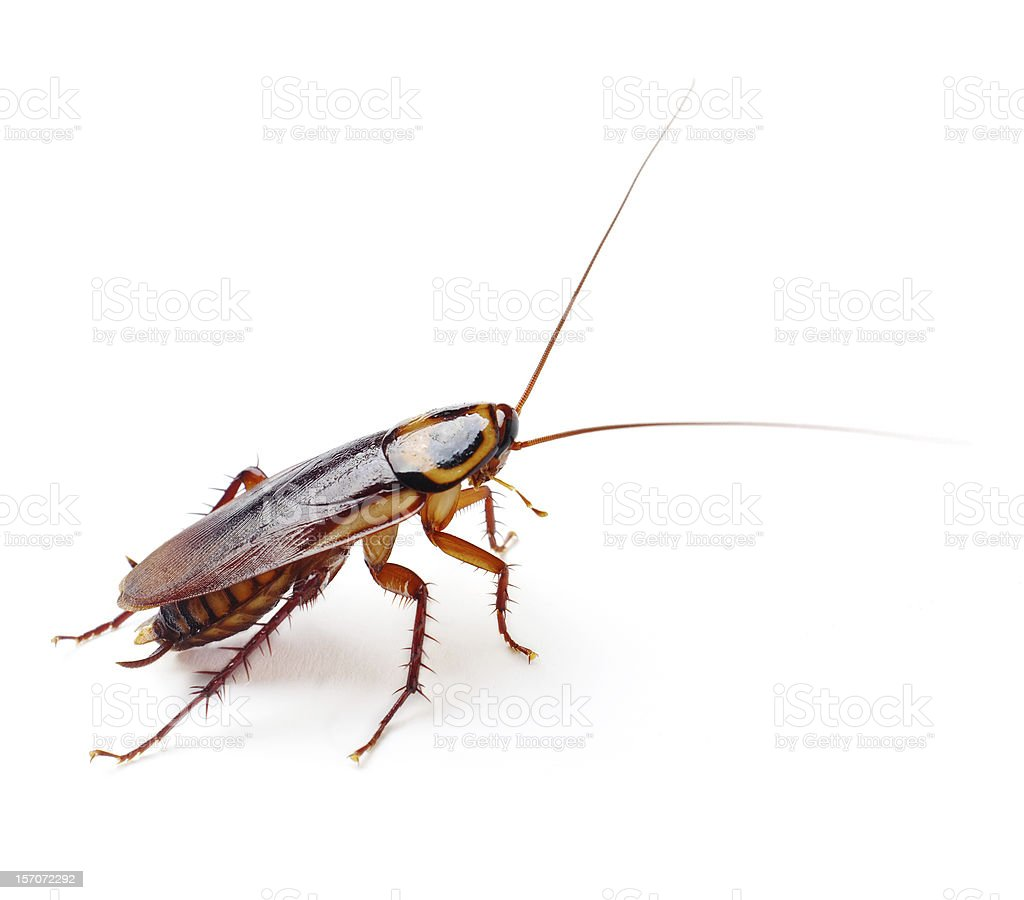 Cockroach stock photo