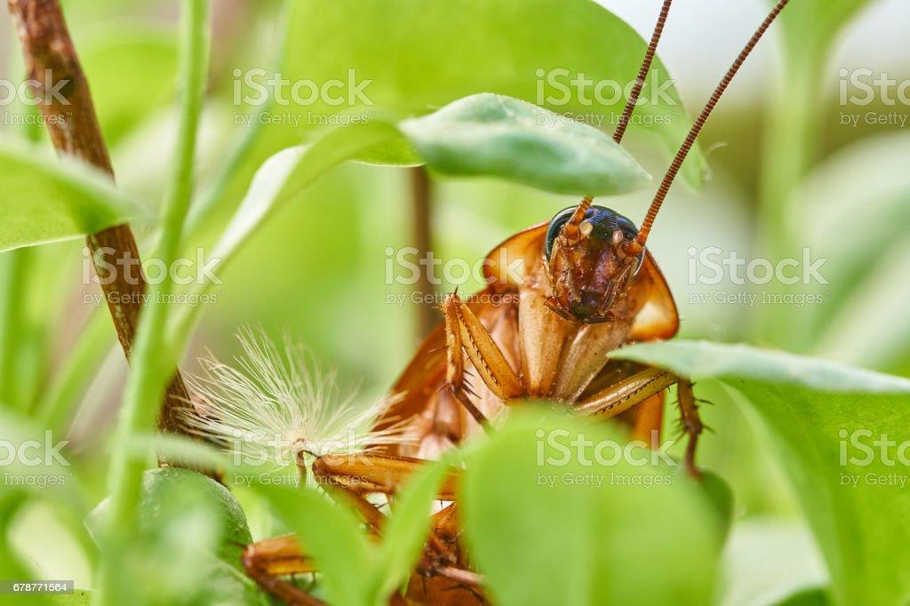 Cockroach portrait - foto stock