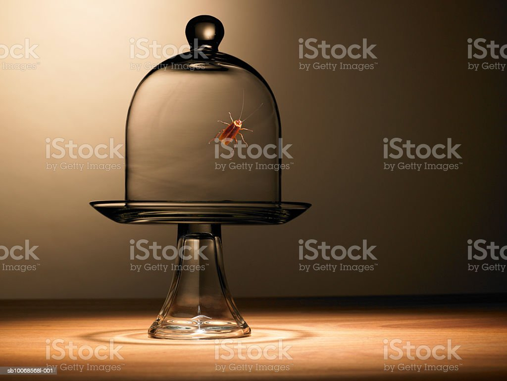 Cockroach under bell jar royalty-free stock photo