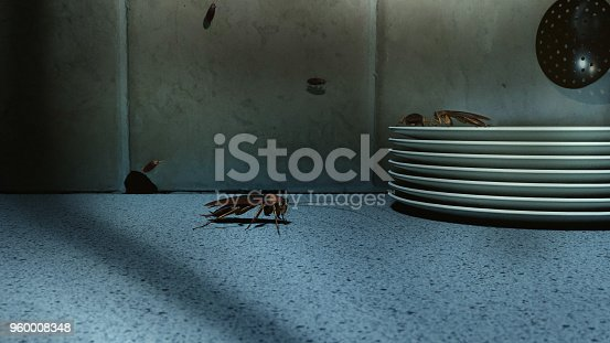 American cockroaches (Periplaneta americana) on kitchen counter