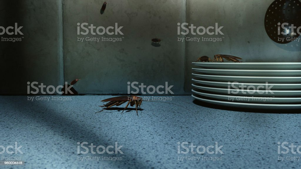 Cockroaches on kitchen counter stock photo