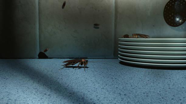 baratas no balcão da cozinha - barata americana - fotografias e filmes do acervo