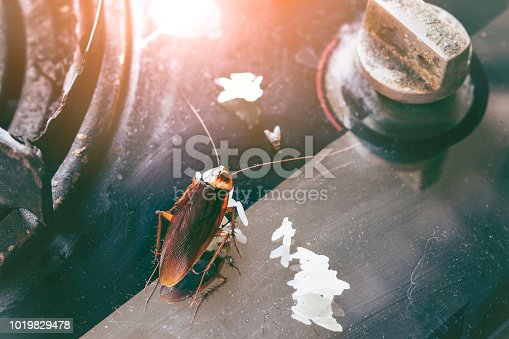 istock Cockroaches on the stove.The problem in the house because of cockroaches living in the kitchen.Cockroach eating whole wheat bread. Cockroaches are carriers of the disease. 1019829478