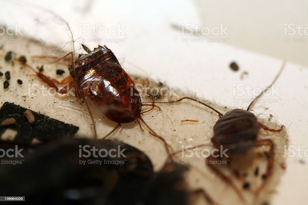 Cockroaches stock photo