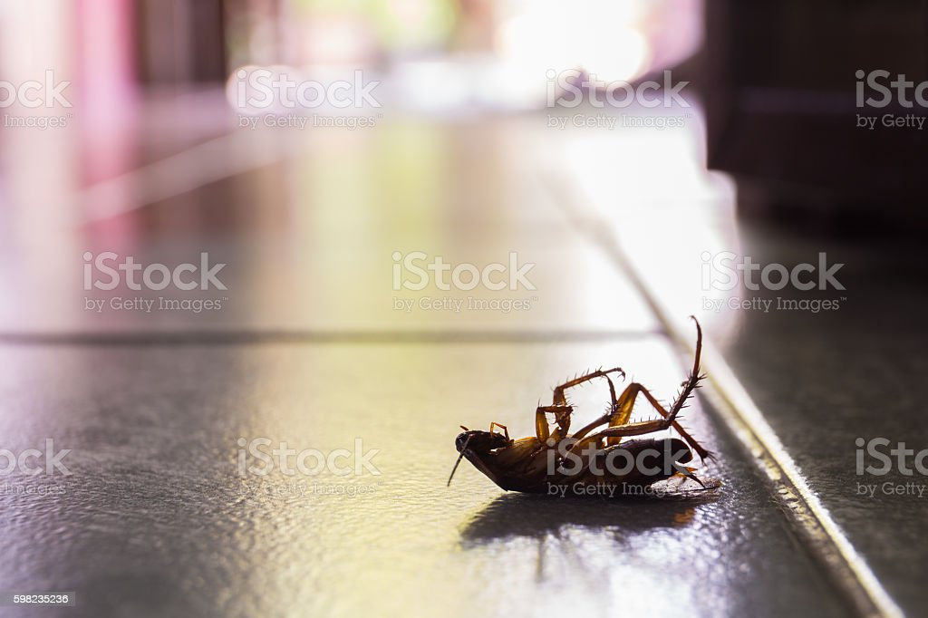 cockroaches - foto stock