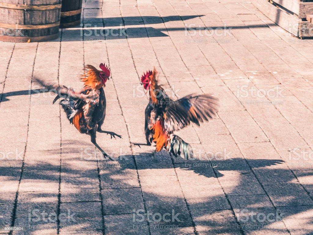 Foto Cocks