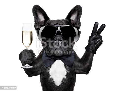 istock cocktail dog 488937589