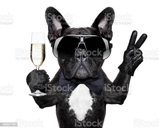 Cocktail dog picture id488937589?b=1&k=6&m=488937589&s=612x612&h=1jeuf1kgfkltqz0jqdk2d95 tymryhxoafmmbmypjgu=