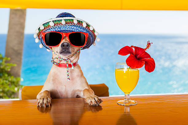 Cane cocktail - foto stock