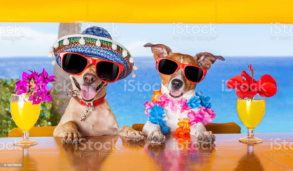 cocktail cani - foto stock