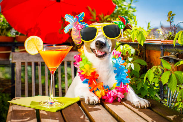 cocktail drink dog summer holiday vacation on balcony - foto stock