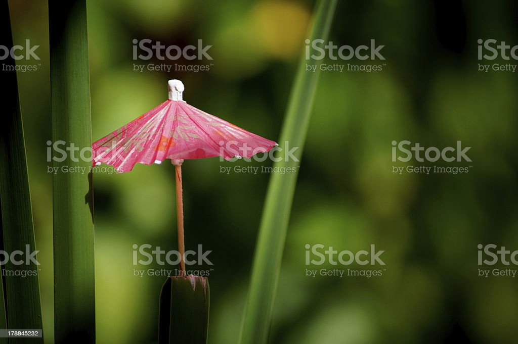 Cocktail umbrella in tropical background stock photo