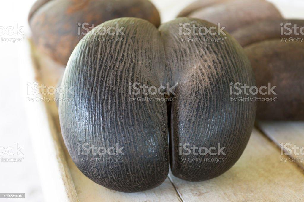 Coco de Mer, Seychellen – Foto