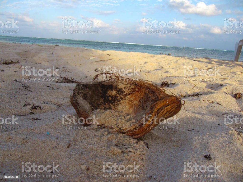 Coco en la playa stock photo