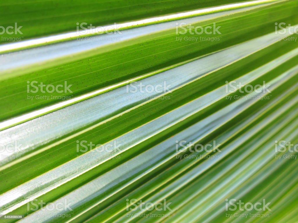 Coco palm leaf stock photo