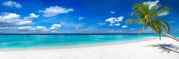 Coco Palme am tropischen Paradiesstrand – Foto