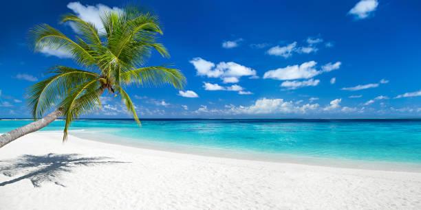 coco palm auf tropisches paradies panorama strand - idylle stock-fotos und bilder