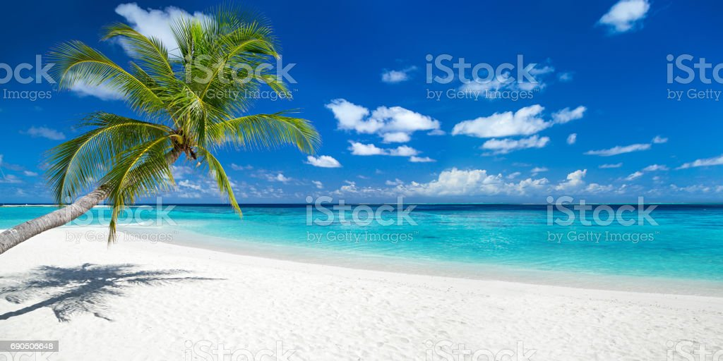 coco palm on tropical paradise panorama beach - foto stock