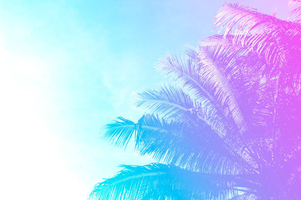 Coco palm tree on sky background. Gentle pink and blue toned photo. stock photo