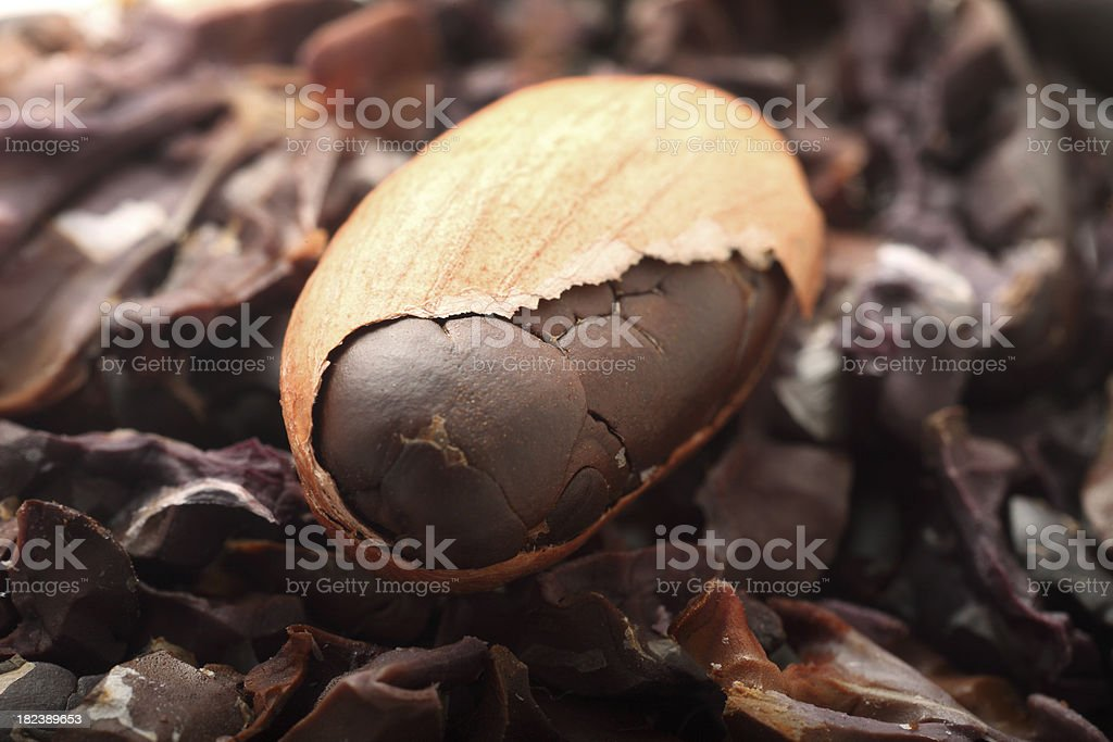 Cocoa bean macro stock photo