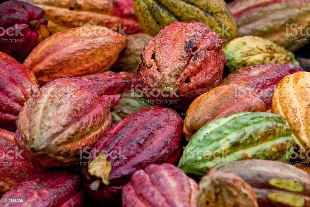 Cocoa bean pods stock photo