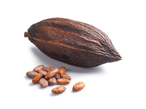 Cocoa Beans and Cocoa Pod Organic cocoa beans, the basis of chocolate, and the cocoa pod they come from.  Isolated on white, with shadow. cocoa bean stock pictures, royalty-free photos & images
