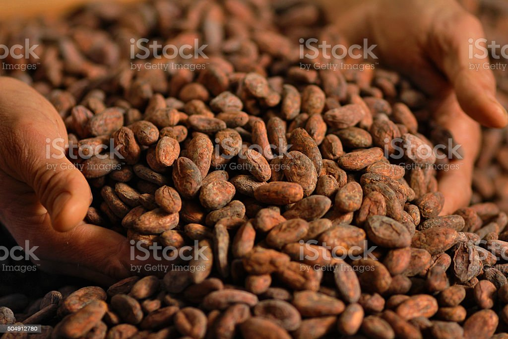 Cocoa Beans and Hands stock photo