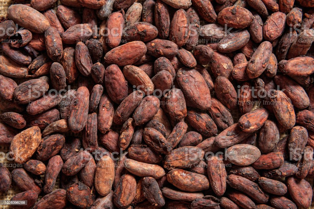 Cacao bonen als achtergrond - Royalty-free Achtergrond - Thema Stockfoto