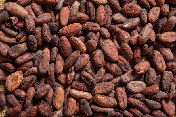 Cocoa beans as background Cocoa beans full background theobroma stock pictures, royalty-free photos & images