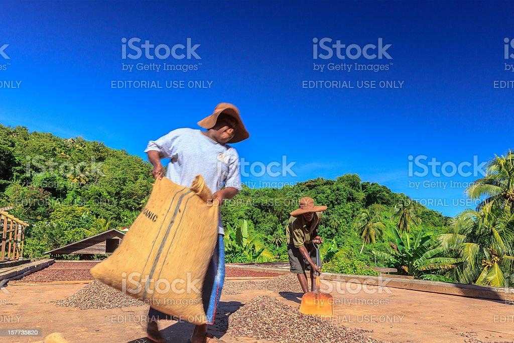 Cocoa Beans Dryer, Grenada W.I. stock photo