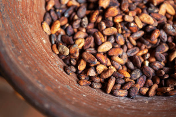 Cocoa beans in a bowl at the farm on Bali island stock photo