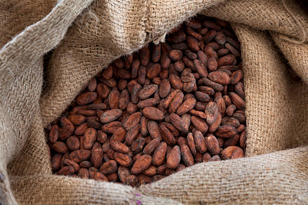 Cocoa beans in a jute bag Jute bag full with cocoa beans cocoa bean stock pictures, royalty-free photos & images