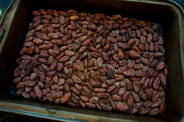 Cocoa beans in a pan stock photo