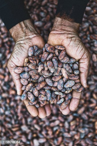 cocoa beans on hands