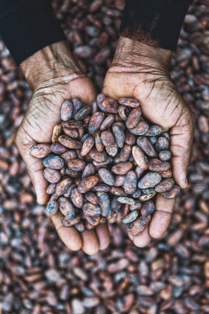 cocoa beans on hands - cioccolata foto e immagini stock
