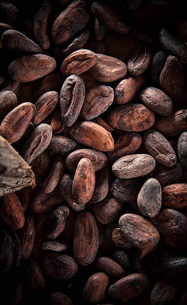 Cocoa Beans Cocoa beans close up cocoa bean stock pictures, royalty-free photos & images
