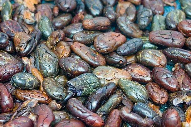 Cocoa Beans - Roasted stock photo