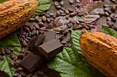 Cocoa composition with two real cacao fruits, cacao leaves, nibs and dark chocolate chunks in the center, showing the different stages of chocolate. Horizontal photography. Top View. Close-up. Studio shot. No people.