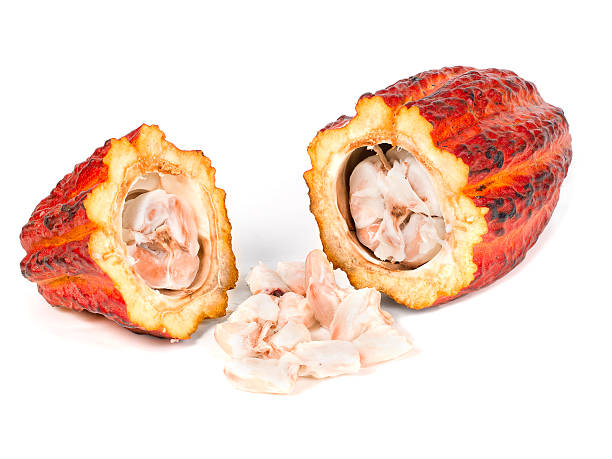 Cocoa fruit - Foodstuff Brazilian cocoa pods and beans, reddish-skinned cocoa fruit, tropical exotic fruit on a wooden background, cocoa plantations are located in south region of state of Bahia, Brazil. theobroma stock pictures, royalty-free photos & images