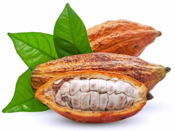 Cocoa fruit or Cacao fruit isolated on white background Cocoa fruit or Cacao fruit isolated on white background plant pod stock pictures, royalty-free photos & images