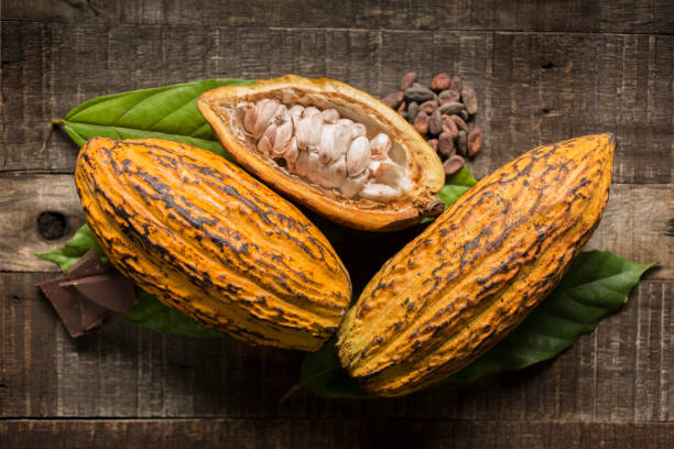 Cocoa fruit Cacao fruits, nibs and chocolate pieces composition on rustic wooden table. Front view. Studio shot. theobroma stock pictures, royalty-free photos & images