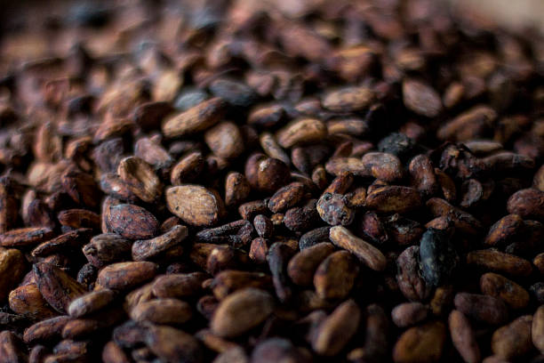 Cocoa Nibs stock photo