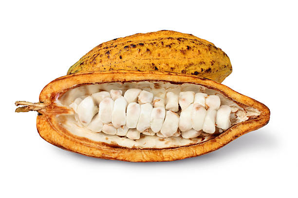 cocoa cocoa on white background theobroma stock pictures, royalty-free photos & images
