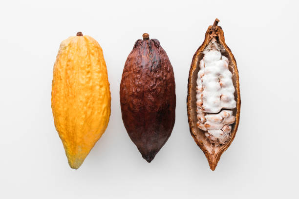 Cocoa pod Cocoa pods on a white background, creative flat lay food concept plant pod stock pictures, royalty-free photos & images